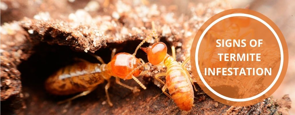 Signs of termite infestation and how to get rid of them forever